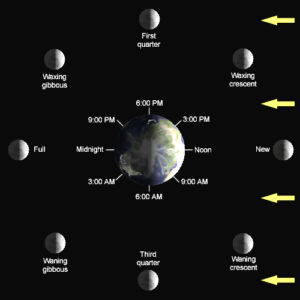 [The 8 Major Moon Phases of the Lunar Cycle]